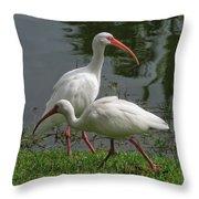 Exploring White Ibis Throw Pillow