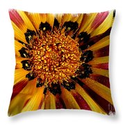 Explosion Of Color - Framed Throw Pillow