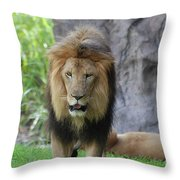 Expressive Male Lion Prowling Around In Nature Throw Pillow