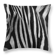 Extreme Close Up Of A Zebra Throw Pillow