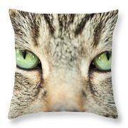 Extreme Close Up Tabby Cat Throw Pillow