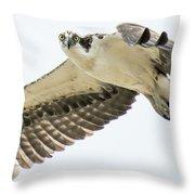 Eye-ball To Eye-ball With An Osprey Throw Pillow