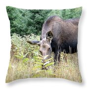 Eye-contact With The Moose Throw Pillow