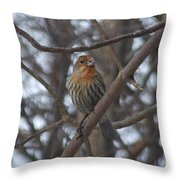Eye-contact With The Rare - Orange Phase - House Finch Throw Pillow