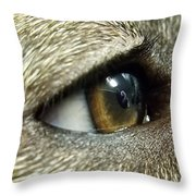 Eye Of The Canine Throw Pillow