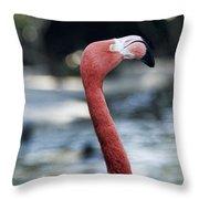 Eye Of The Flamingo Throw Pillow