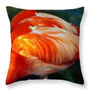 Eye Of The Flamingos Throw Pillow