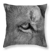 Eye Of The Lion #2  Black And White  Throw Pillow