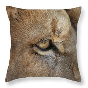 Eye Of The Lion #2 Throw Pillow