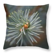 Eye Of The Pine Throw Pillow