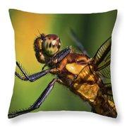 Eye To Eye Dragonfly Throw Pillow