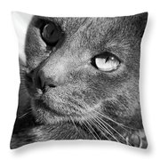 Eyes Of Russian Blue Throw Pillow