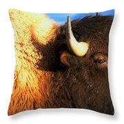 Eyes Of The Bison Spring 2018 Throw Pillow