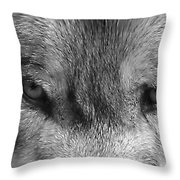 Eyes Of The Wild Throw Pillow