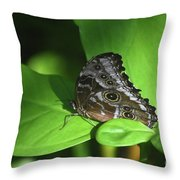 Eyespots On The Closed Wings Of A Blue Morpho Butterfly Throw Pillow