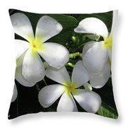 F1 Plumeria Frangipani Flowers Hawaii Throw Pillow