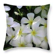 F2 Plumeria Frangipani Flowers Hawaii Throw Pillow