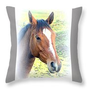 Face The Horse That Is Facing You   Throw Pillow