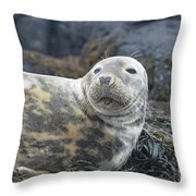 Face Of A Gray Seal Throw Pillow