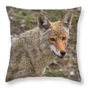 Face Of The American Coyote Throw Pillow