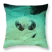 Face Off With Stingray Throw Pillow