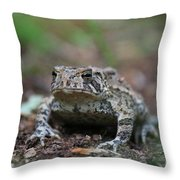 Face To Face With A Fowler Toad  Throw Pillow