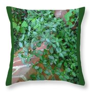 Fae's Stonewall Throw Pillow