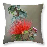 Fairy Duster-img_488917 Throw Pillow