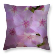 Fairy Tale Phlox Throw Pillow