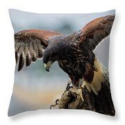Falcon On Gloved Hand 5251 Throw Pillow
