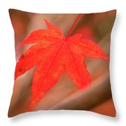 Fall Color Maple Leaves At The Forest In Kamakura, Kanagawa, Jap Throw Pillow