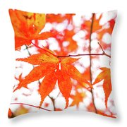 Fall Color Maple Leaves At The Forest In Kumamoto, Japan Throw Pillow