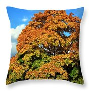 Fall Colors 19 Throw Pillow