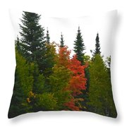 Fall Colors Are Starting Throw Pillow