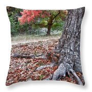 Fall Colors At Lost Maples Throw Pillow