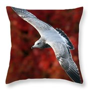Fall Gull Throw Pillow