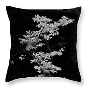 Fall Illumination In B/w Throw Pillow