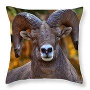 Fall Ram Throw Pillow
