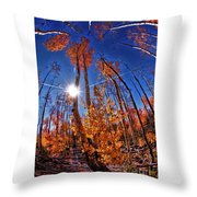 Fall Sun And Trees Throw Pillow