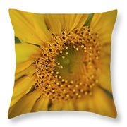 Fall Sunflower Avila, Ca Throw Pillow