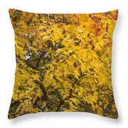 Fall Tree Leaves 2 Throw Pillow