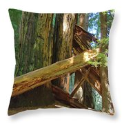 Fallen Redwood Trees Forest Throw Pillow