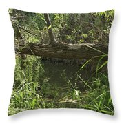 Fallen Tree In Peters Canyon Throw Pillow