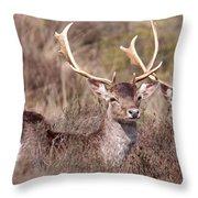 Fallow Deer Buck Throw Pillow