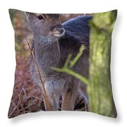 Fallow Deer Fawn Throw Pillow
