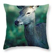 Fallow Deer Fawn Throw Pillow