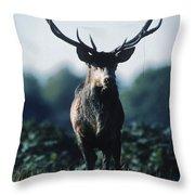 Fallow Deer Male Throw Pillow
