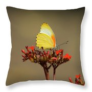 False Dotted Border Butterfly Throw Pillow