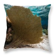 Fan-tastic Sea Web Throw Pillow