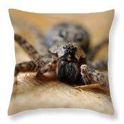 Spider Close Up Throw Pillow